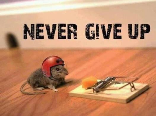 on giving up