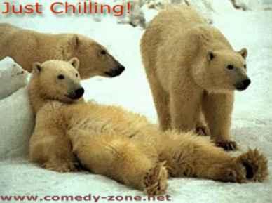 polar bears chilling